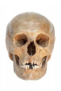 Forensic Anthropology Salary And Job Description