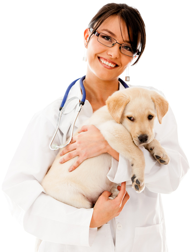 Online doctor of veterinary medicine degree